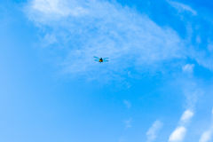 Dragonfly flying in to blue sky Royalty Free Stock Photo