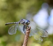 Dragonfly in foreground royalty free stock photo