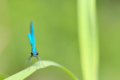 Dragonfly in forest Stock Image