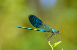Dragonfly in forest Stock Photography