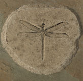 Dragonfly Fossil Royalty Free Stock Photography