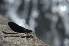 Dragonfly in front of the waterfall Stock Image