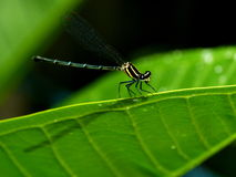 Dragonfly in the garden. Stock Image