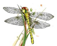 Dragonfly on grass Royalty Free Stock Photos