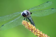 Dragonfly on grass Stock Photos