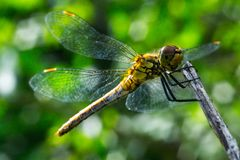 Dragonfly on a grass background stock photography