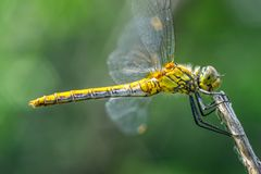 Dragonfly on a grass background royalty free stock image