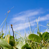 Dragonfly, grass, blue sky summer background Stock Images