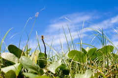 Dragonfly, grass, blue sky summer background Stock Image
