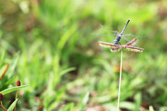 Dragonfly on grass Royalty Free Stock Photo