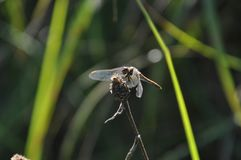 Dragonfly in grass royalty free stock photography