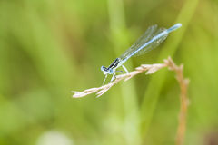 Dragonfly on a green plant Stock Images