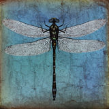 Dragonfly grunge background Royalty Free Stock Photos