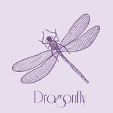 Organic Dragonfly Stock Images