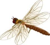dragonfly ilustracja Zdjęcia Stock
