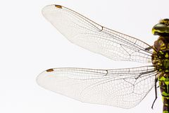 Dragonfly, Insect, Animal, Wing Stock Photo