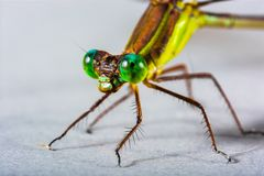 Dragonfly, Insect, Close, Eye Royalty Free Stock Image