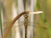 Dragonfly, Insect, Dragonflies And Damseflies, Invertebrate