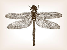 Dragonfly insect hand drawn sketch vector Stock Photo