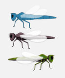 Dragonfly Insects Vector Stock Photos