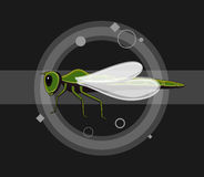Dragonfly Insects Vector Illustration Stock Image