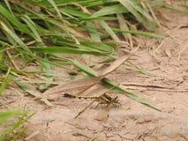 Dragonfly insekta ziemi bambusa liście zdjęcie stock