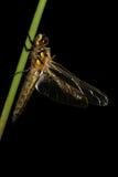 Dragonfly isolated on black background Stock Photo