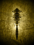 Dragonfly. A dragonfly isolated on grunge background Stock Photography