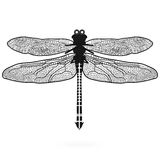 Dragonfly isolated high quality Stock Photos