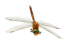 Dragonfly. Isolated on white background Stock Photos