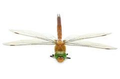 Dragonfly. Isolated on white background Royalty Free Stock Image