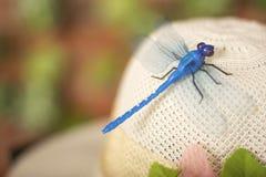 Dragonfly jaskrawy biały kapelusz Obrazy Royalty Free