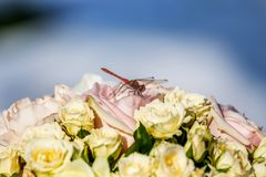 Dragonfly is just sitting on flowers. Dragonfly is just sitting on wedding bunch of flowers Stock Photo