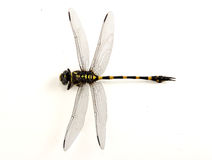 Dragonfly kolor żółty i czerń kolor obrazy stock
