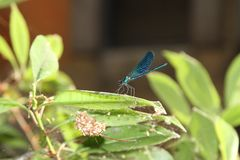 Dragonfly on a leaf Royalty Free Stock Photos
