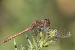 A dragonfly on Southampton Common stock photo