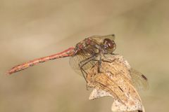 A dragonfly on Southampton Common royalty free stock photos