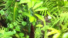 Dragonfly leaving and return to a ginger flower. stock footage