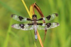 Dragonfly. Lovely dragonfly enjoying the sunshine Royalty Free Stock Image