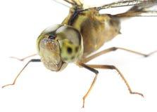 Dragonfly macro Stock Photos