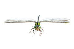 Dragonfly macro isolated Royalty Free Stock Photo