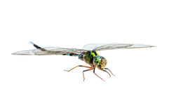 Dragonfly macro isolated Royalty Free Stock Photos