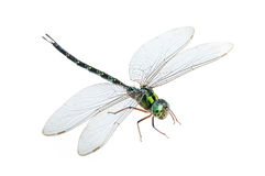 Dragonfly macro isolated. On white background Stock Photography