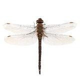Dragonfly macro isolated on white Stock Photography