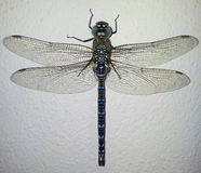 Dragonfly macro Royalty Free Stock Images