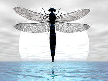 Dragonfly Moon. Dragonfly flying before the moon Stock Image