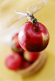 Dragonfly na jabłku Zdjęcie Stock