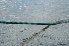 dragonfly na zielonej arkanie Zdjęcie Royalty Free