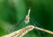 Dragonfly in the natural Stock Images