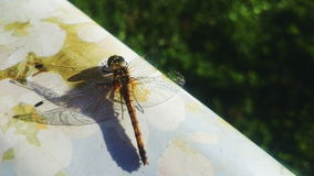 Dragonfly. On the nature Royalty Free Stock Image
